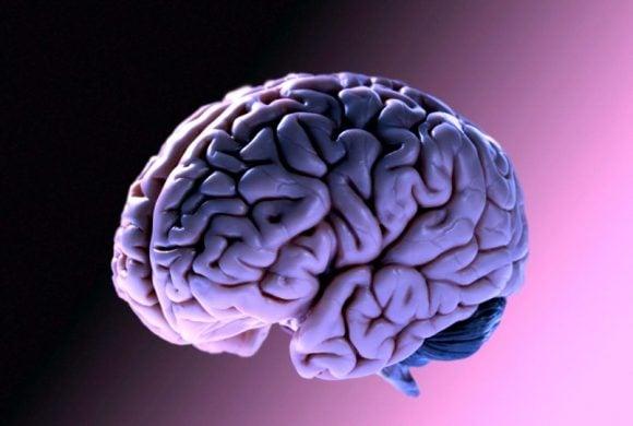 25 curiosità che non sapevate sul cervello umano