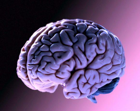 il cervello dopo la morte