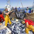 sgravi contributivi settore pesca