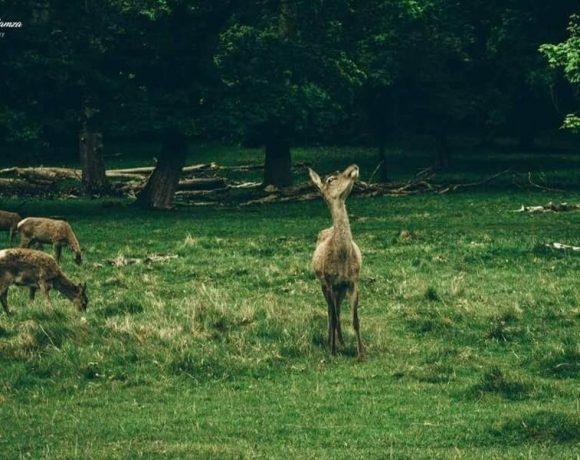 Richmond Park , un bellismo posto dove ammirare la natura