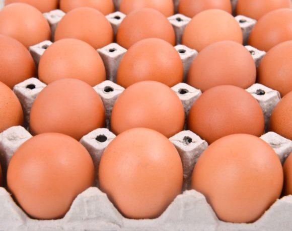 Uova con salmonella