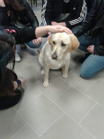 Pet Therapy per studenti autistici, disabilità intellettiva, sensoriale e normodotati, ecco dove