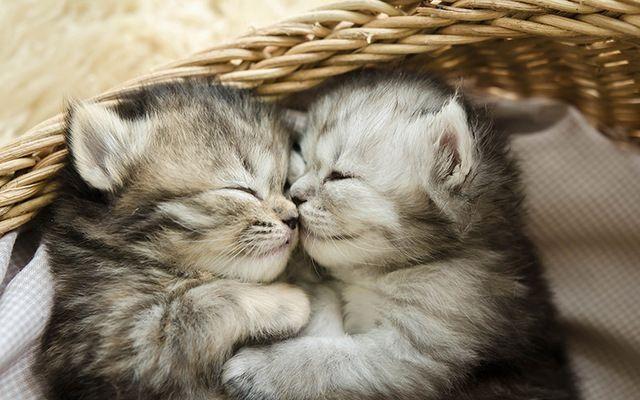 Nuova offerta di lavoro: coccolatore gatti