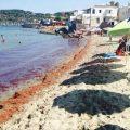 L' Alga tossica continua a minare l'estate: ecco dove