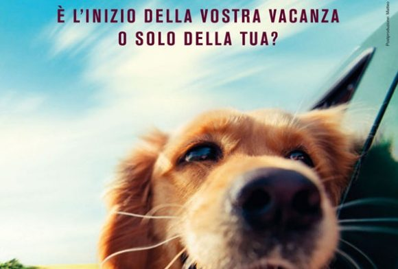 Andare in vacanza e lasciare il cane da solo, è reato e non solo, ecco cosa si rischia