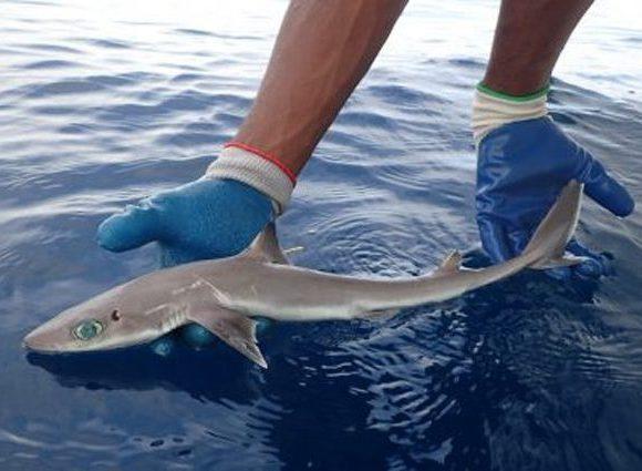 squalo Clark