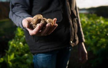 Glifosato in agricoltura: i pesticidi sono davvero cancerogeni?