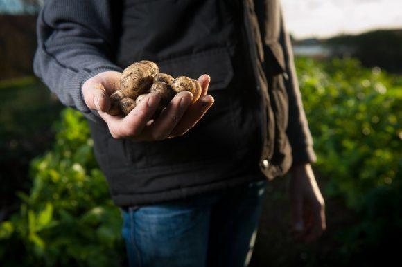 I pesticidi sono davvero cancerogeni? Glifosato in agricoltura