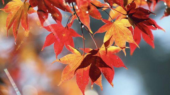Addio definitivo all'estate, benvenuto autunno