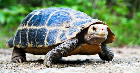 Tartaruga a rischio estinzione, ha scelto una piccola località per deporre le uova: ecco dove