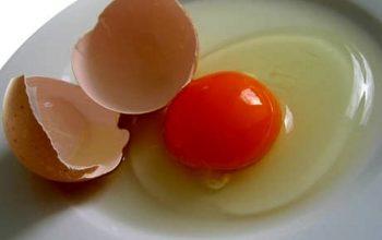 Uova fresche, rischio salmonella