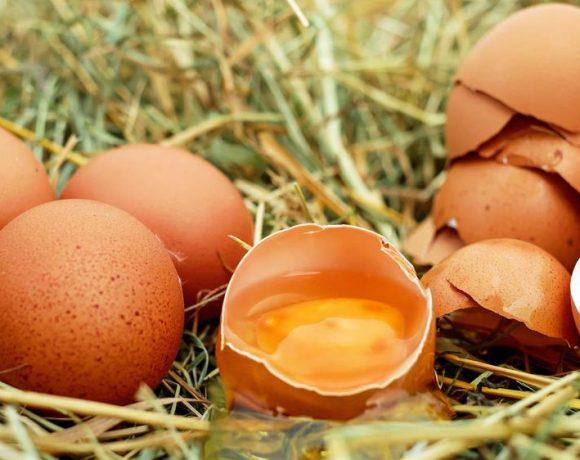 Uova fresche ritirate dal mercato, in alcune anche presenza di salmonella