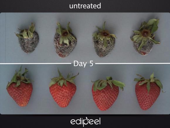 La pellicola vegetale che prolunga la durata di frutta e verdura, ecco come funziona