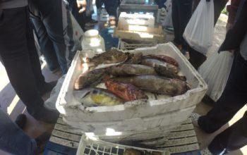 pesce non idoneo al consumo