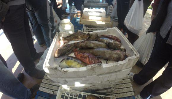 Pesce non idoneo, sequestrata una tonnellata e mezza, ecco dove