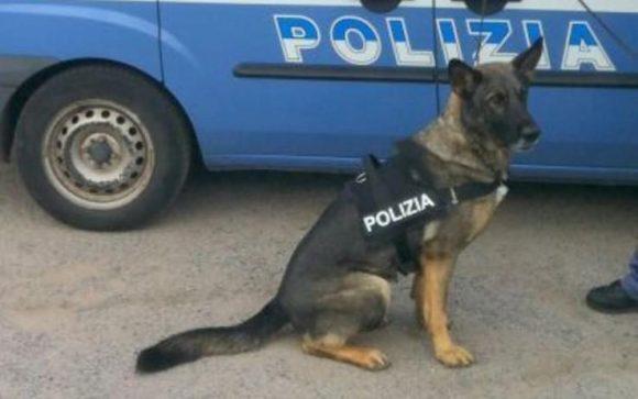 Cane poliziotto: è possibile adottarlo, ecco come fare