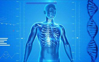 scheletro umano