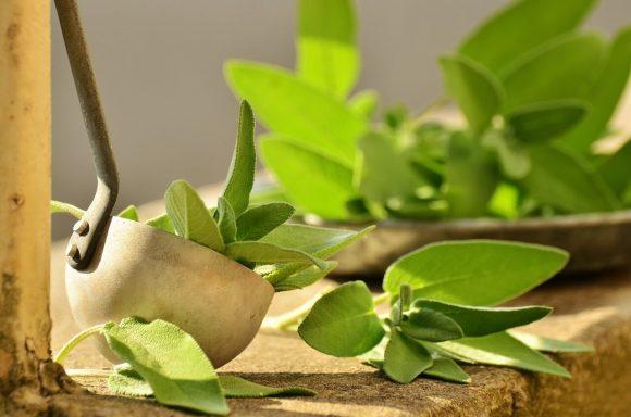 Dieta delle erbe: elimina le scorie, controlla la pressione, seda la fame