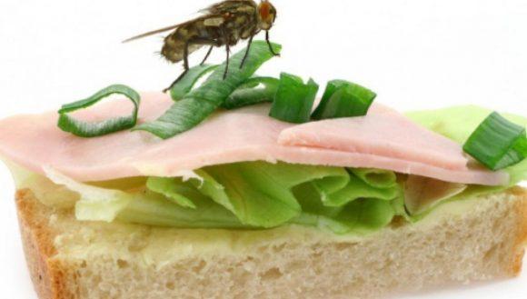 É davvero pericoloso che una mosca si poggi sul nostro cibo?