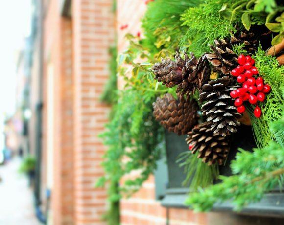 Piante di Natale