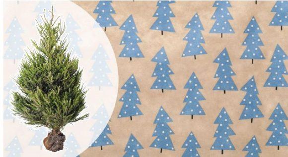 Albero di Natale da IKEA: oggi è possibile acquistarlo a 15 euro e se lo riconsegni ricevi un buono dell'intero importo