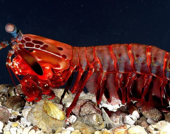 Crostaceo