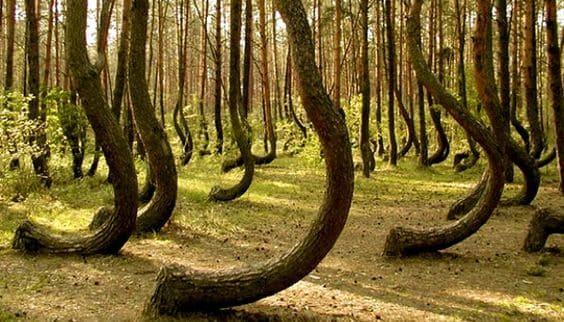 """La foresta """"incantata"""" della Romania: chi entra non se ne va mai"""