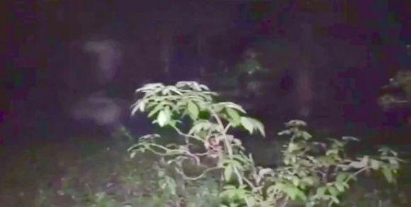 Investigatore del paranormale immortala fantasma in un bosco