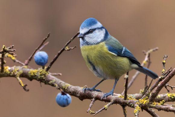 Mistero in Germania per la morte di oltre 11 mila uccelli