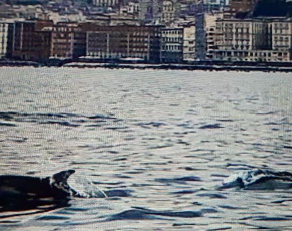 Delfini a Napoli